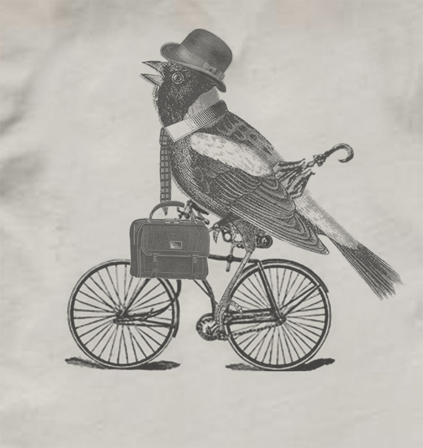 bird on bike